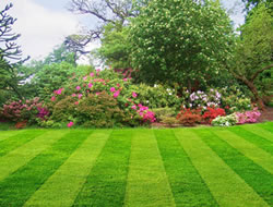 Lawn Carein Glendale